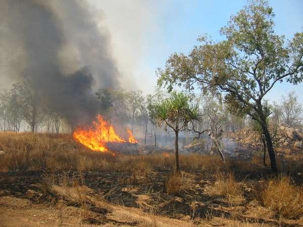 Incendi estivi: secondo Coldiretti nel 2016 l'allarme più alto di sempre