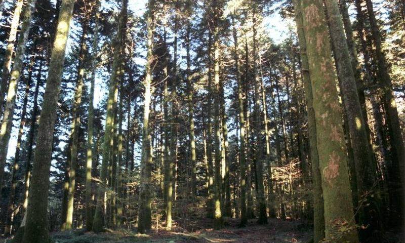 Giornata Alberi: Coldiretti, con boschi raddoppiati e' record storico