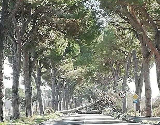 Maltempo, per gli Agronomi-Forestali del Lazio serve prevenzione e monitoraggio per evitare crolli di alberi